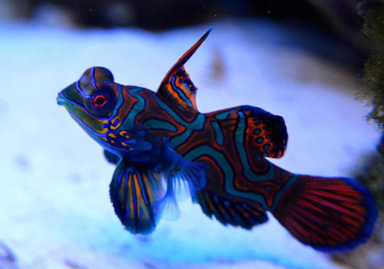 Peces marinos más increíbles